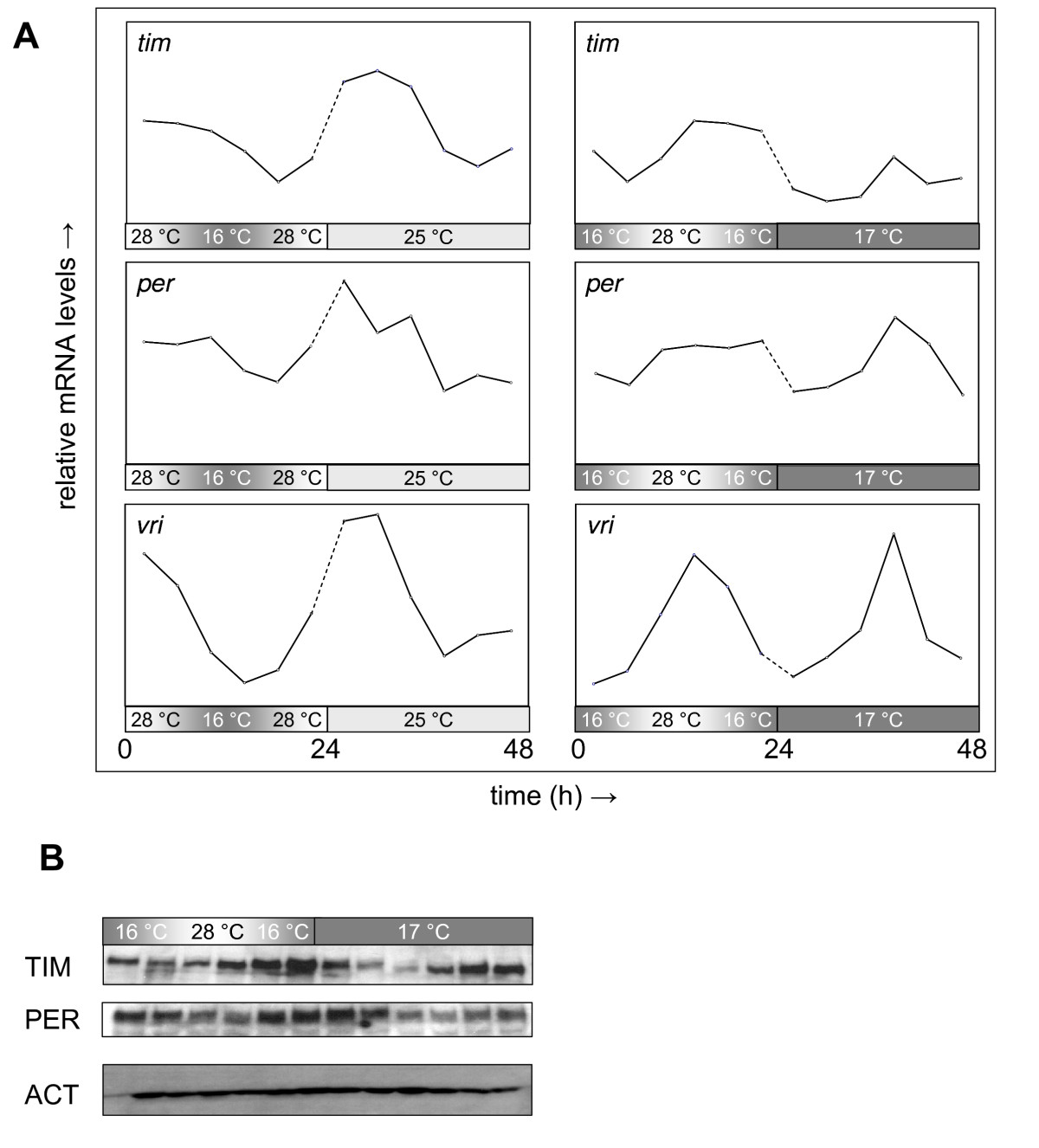 http://static-content.springer.com/image/art%3A10.1186%2F1741-7007-7-49/MediaObjects/12915_2009_Article_257_Fig9_HTML.jpg