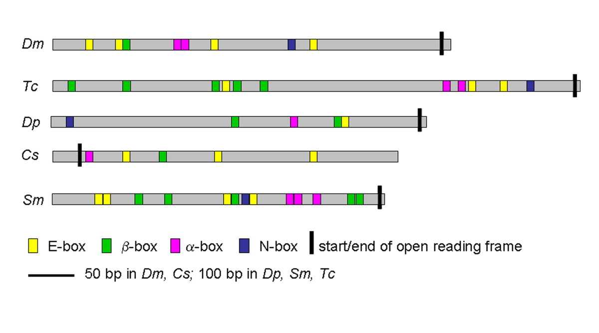 http://static-content.springer.com/image/art%3A10.1186%2F1741-7007-8-127/MediaObjects/12915_2010_Article_423_Fig4_HTML.jpg
