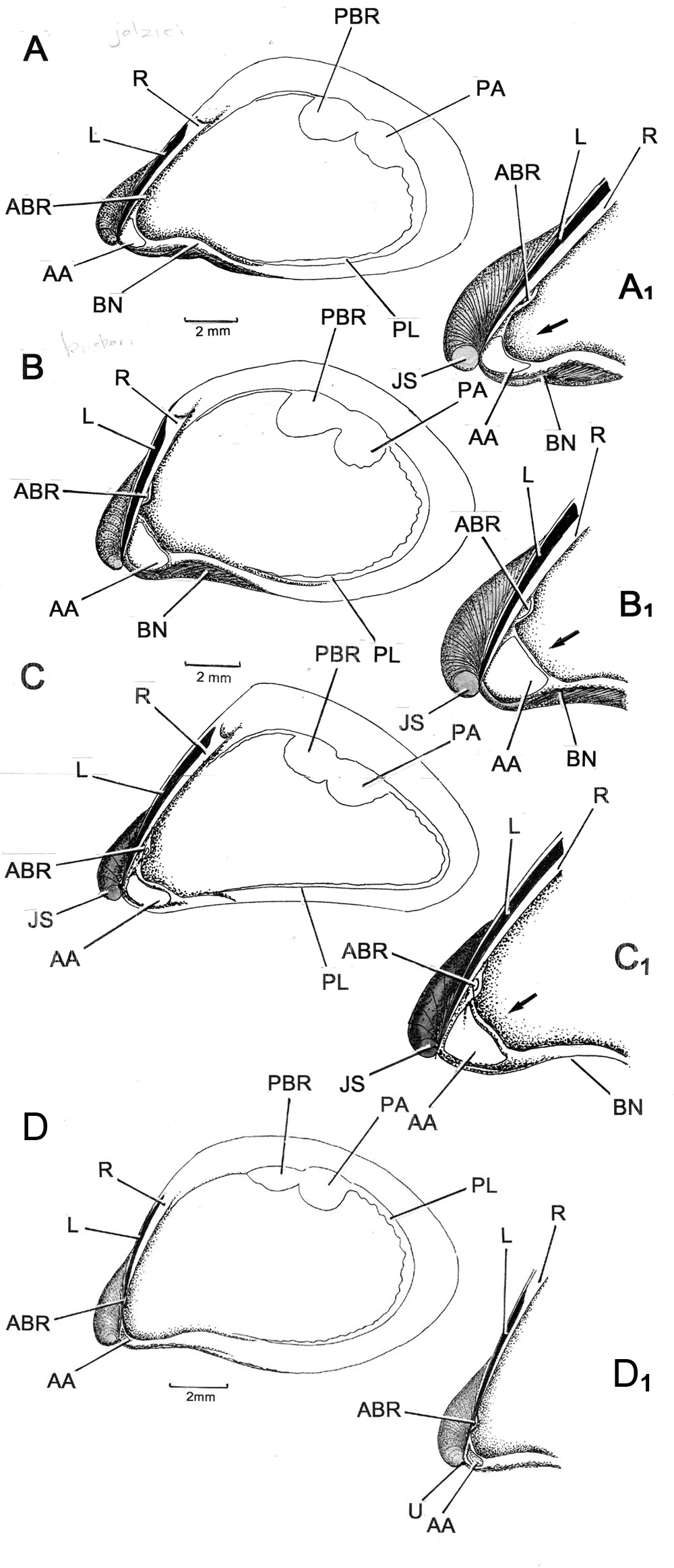 http://static-content.springer.com/image/art%3A10.1186%2F1742-9994-10-5/MediaObjects/12983_2012_Article_222_Fig7_HTML.jpg