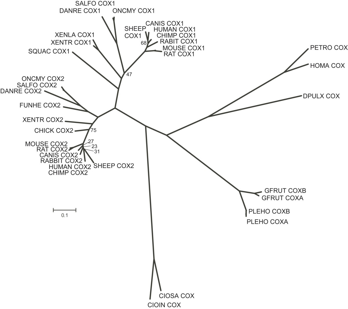 http://static-content.springer.com/image/art%3A10.1186%2F1742-9994-5-11/MediaObjects/12983_2008_Article_79_Fig3_HTML.jpg