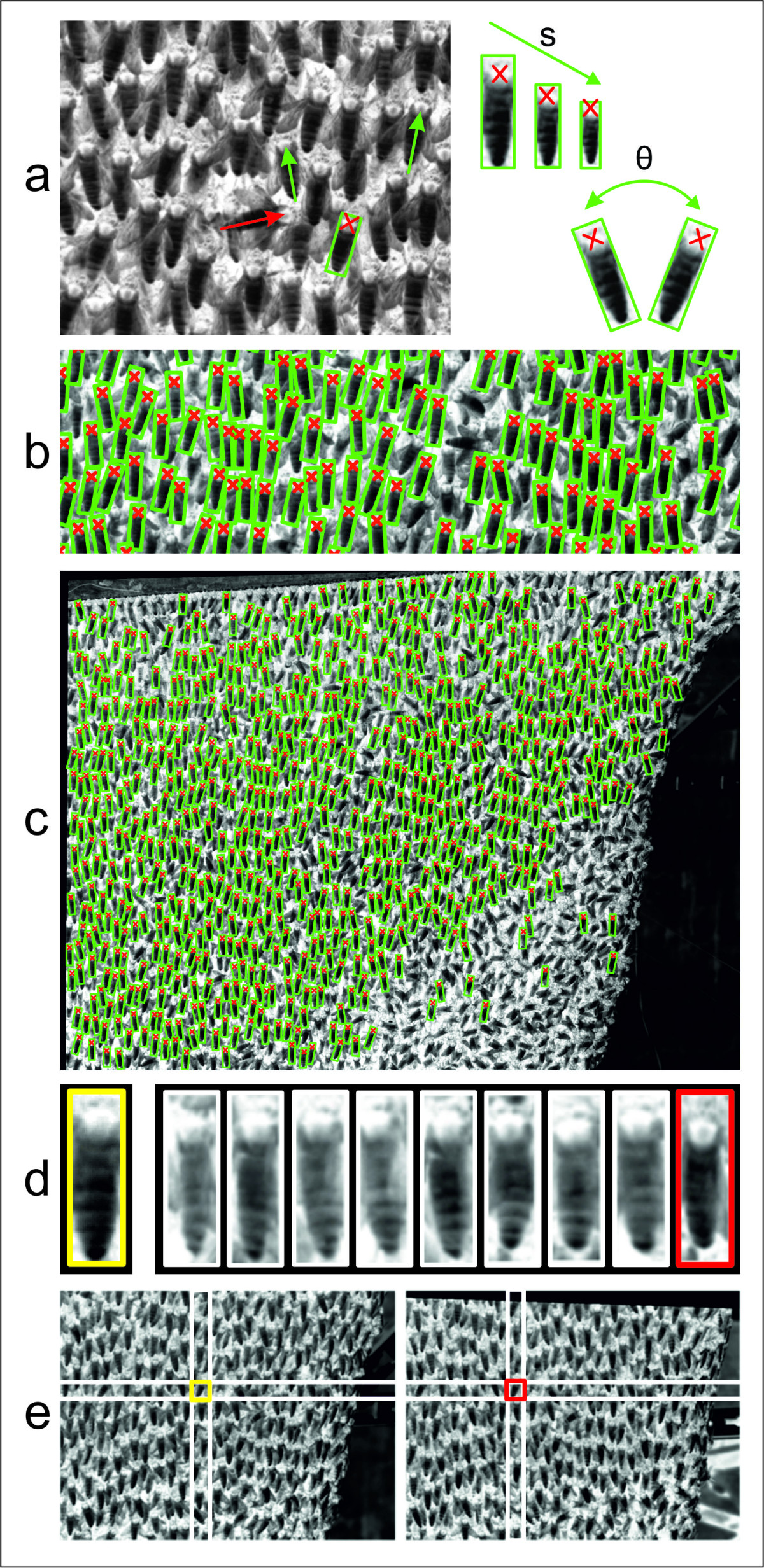 http://static-content.springer.com/image/art%3A10.1186%2F1742-9994-8-3/MediaObjects/12983_2010_Article_150_Fig4_HTML.jpg
