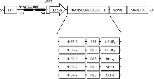 http://static-content.springer.com/image/art%3A10.1186%2F1743-422X-10-240/MediaObjects/12985_2013_2229_Fig1_HTML.jpg