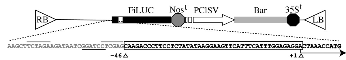 http://static-content.springer.com/image/art%3A10.1186%2F1743-422X-2-16/MediaObjects/12985_2004_Article_31_Fig2_HTML.jpg