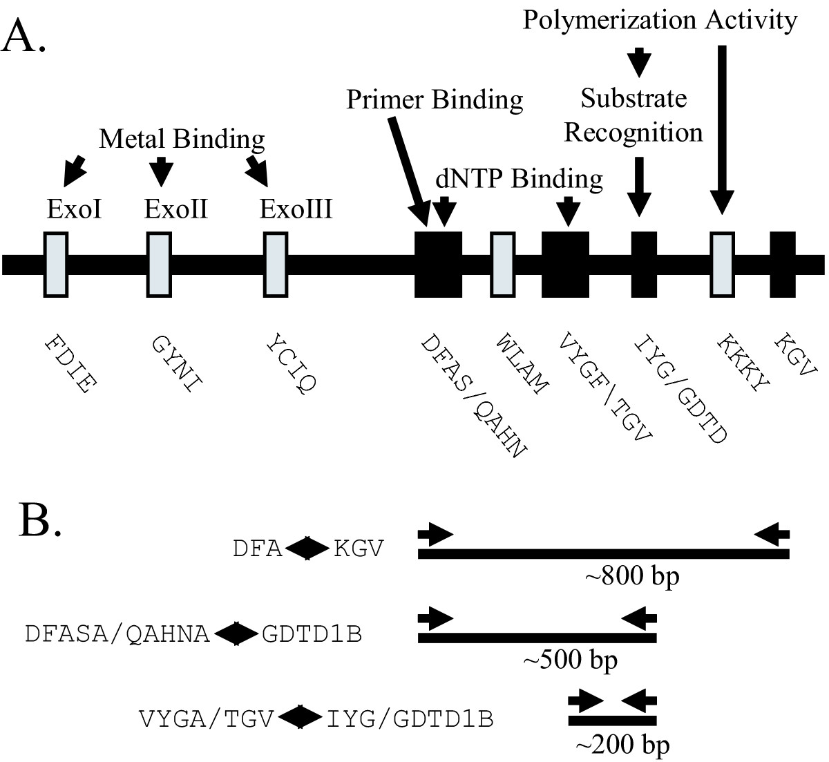 http://static-content.springer.com/image/art%3A10.1186%2F1743-422X-2-20/MediaObjects/12985_2005_Article_35_Fig2_HTML.jpg