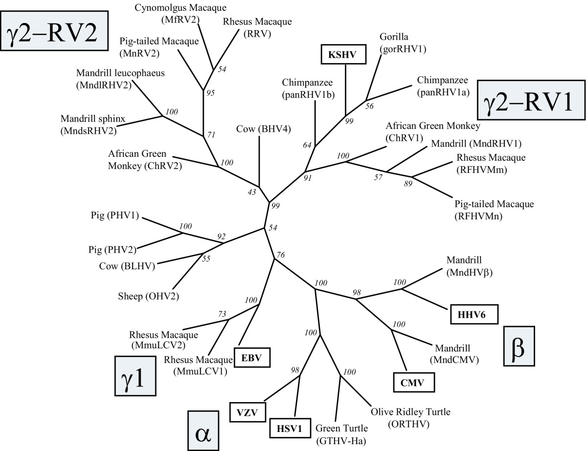 http://static-content.springer.com/image/art%3A10.1186%2F1743-422X-2-20/MediaObjects/12985_2005_Article_35_Fig7_HTML.jpg