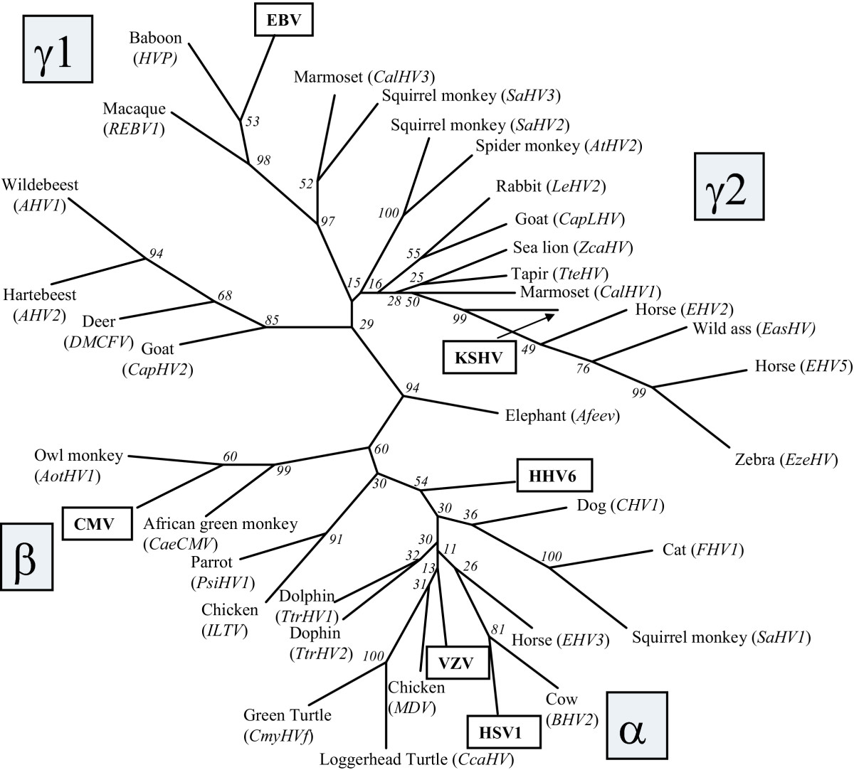 http://static-content.springer.com/image/art%3A10.1186%2F1743-422X-2-20/MediaObjects/12985_2005_Article_35_Fig9_HTML.jpg