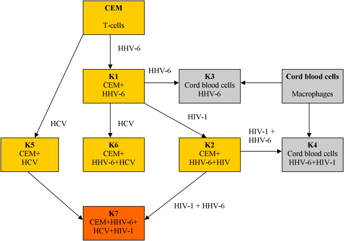 http://static-content.springer.com/image/art%3A10.1186%2F1743-422X-4-106/MediaObjects/12985_2007_Article_319_Fig1_HTML.jpg