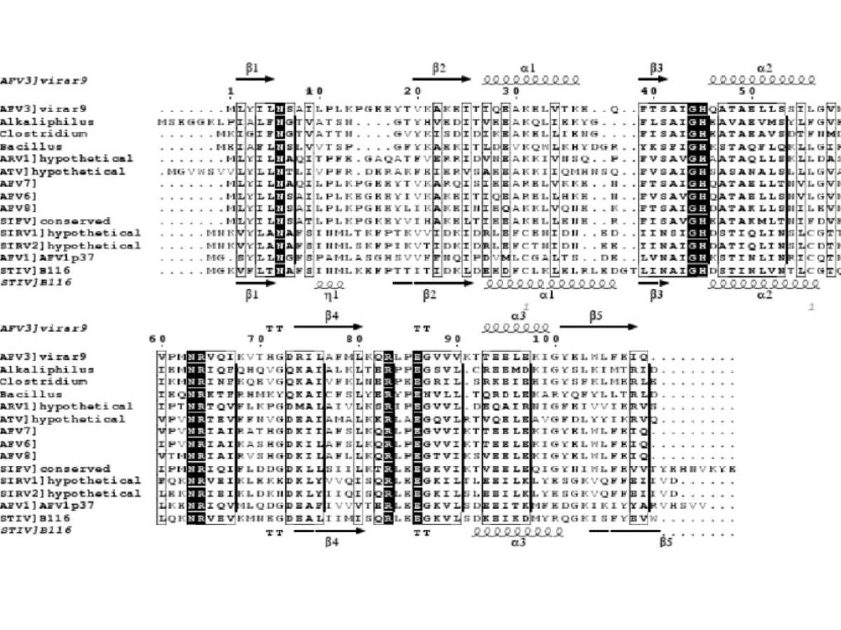 http://static-content.springer.com/image/art%3A10.1186%2F1743-422X-4-12/MediaObjects/12985_2006_Article_225_Fig2_HTML.jpg