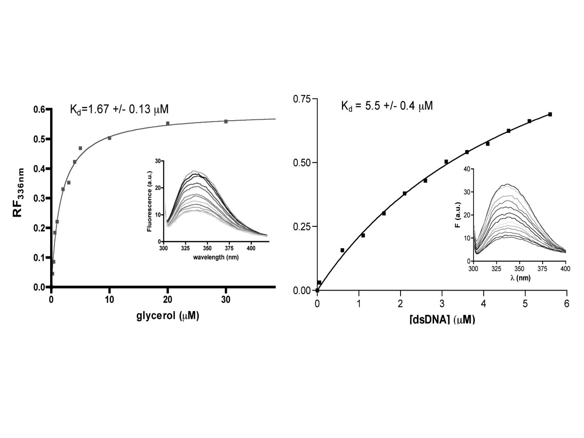 http://static-content.springer.com/image/art%3A10.1186%2F1743-422X-4-12/MediaObjects/12985_2006_Article_225_Fig3_HTML.jpg