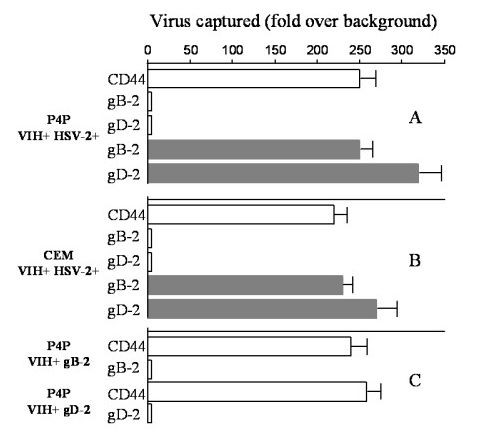 http://static-content.springer.com/image/art%3A10.1186%2F1743-422X-4-2/MediaObjects/12985_2006_Article_215_Fig6_HTML.jpg