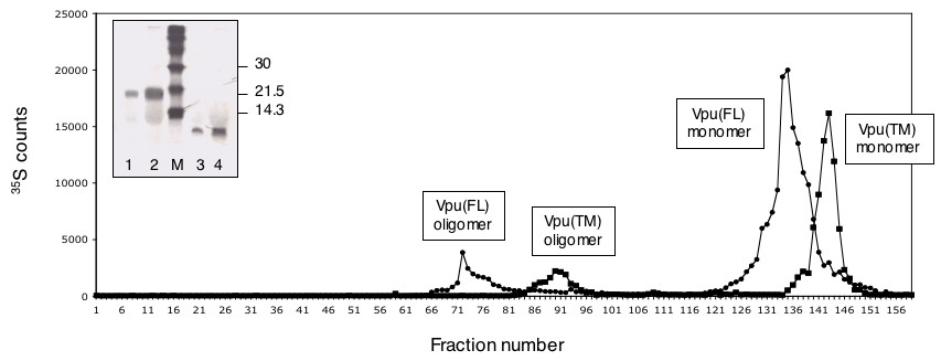 http://static-content.springer.com/image/art%3A10.1186%2F1743-422X-4-81/MediaObjects/12985_2007_Article_294_Fig4_HTML.jpg