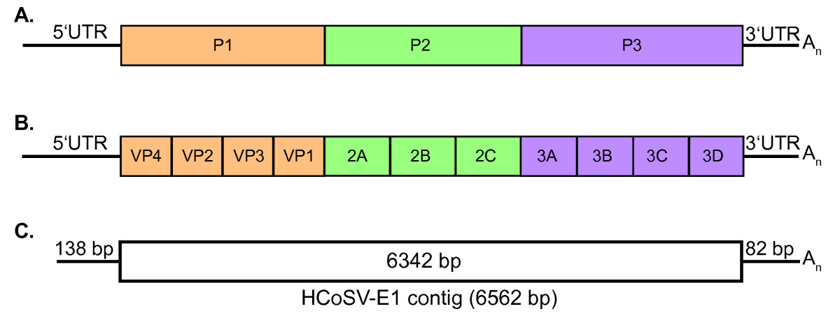 http://static-content.springer.com/image/art%3A10.1186%2F1743-422X-5-159/MediaObjects/12985_2008_Article_508_Fig1_HTML.jpg