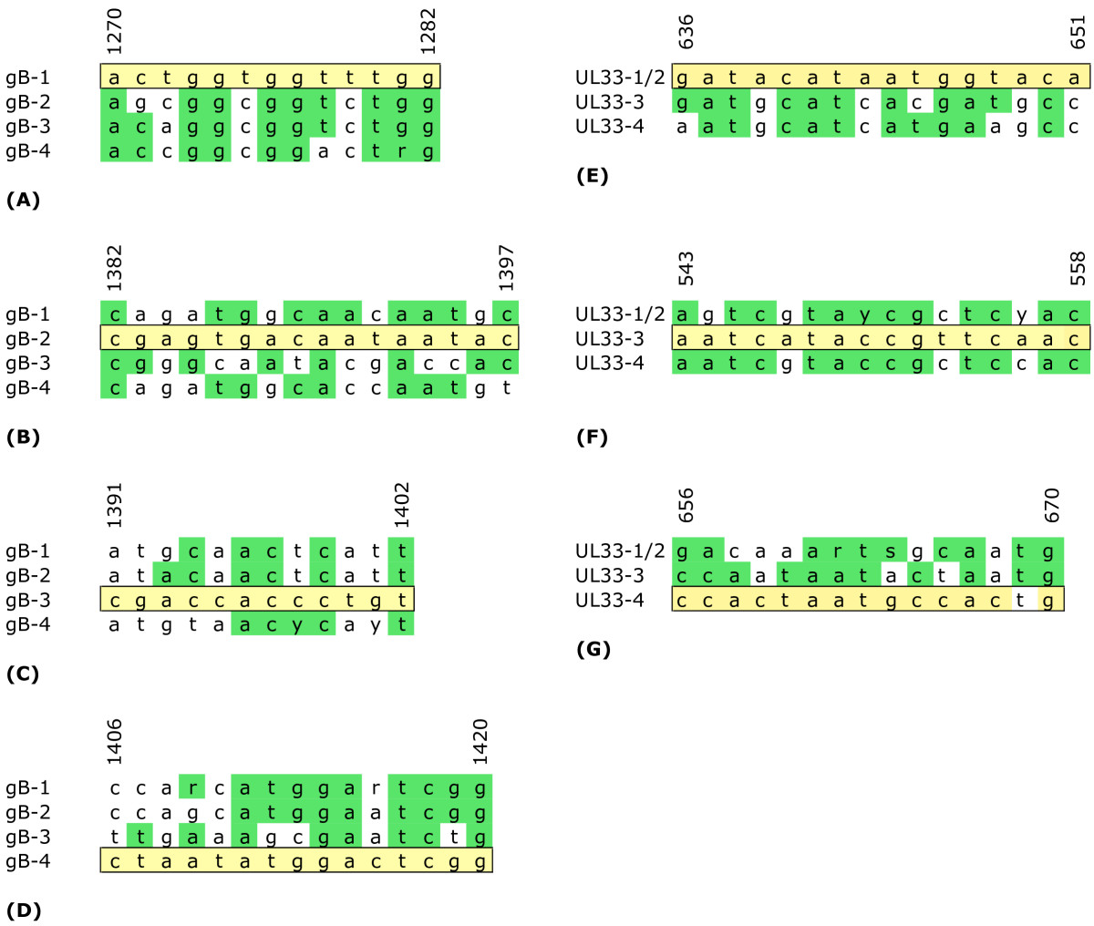 http://static-content.springer.com/image/art%3A10.1186%2F1743-422X-6-210/MediaObjects/12985_2009_Article_724_Fig2_HTML.jpg