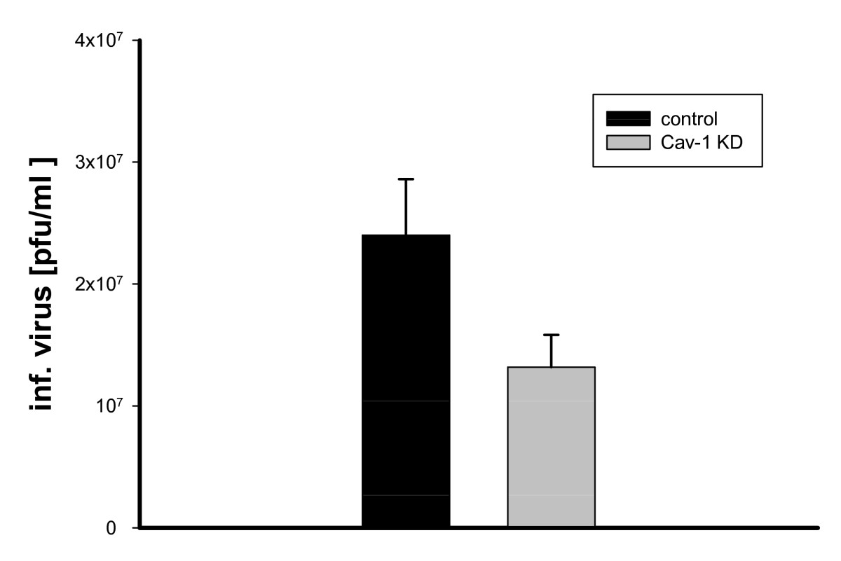 http://static-content.springer.com/image/art%3A10.1186%2F1743-422X-7-108/MediaObjects/12985_2010_Article_853_Fig1_HTML.jpg