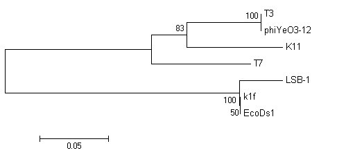 http://static-content.springer.com/image/art%3A10.1186%2F1743-422X-7-255/MediaObjects/12985_2010_Article_1000_Fig5_HTML.jpg