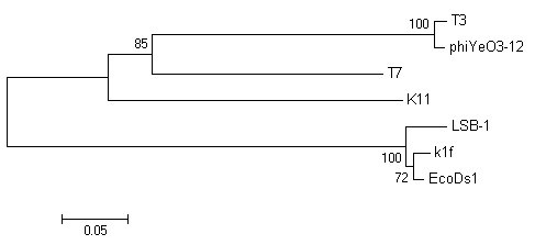 http://static-content.springer.com/image/art%3A10.1186%2F1743-422X-7-255/MediaObjects/12985_2010_Article_1000_Fig6_HTML.jpg