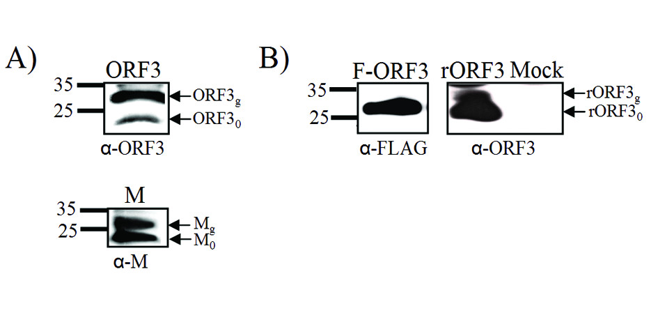 http://static-content.springer.com/image/art%3A10.1186%2F1743-422X-7-6/MediaObjects/12985_2009_Article_751_Fig5_HTML.jpg
