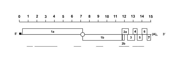 http://static-content.springer.com/image/art%3A10.1186%2F1743-422X-8-160/MediaObjects/12985_2011_1275_Fig1_HTML.jpg