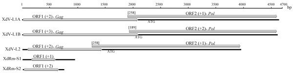 http://static-content.springer.com/image/art%3A10.1186%2F1743-422X-9-140/MediaObjects/12985_2011_1810_Fig1_HTML.jpg