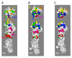 http://static-content.springer.com/image/art%3A10.1186%2F1743-422X-9-91/MediaObjects/12985_2011_1887_Fig5_HTML.jpg