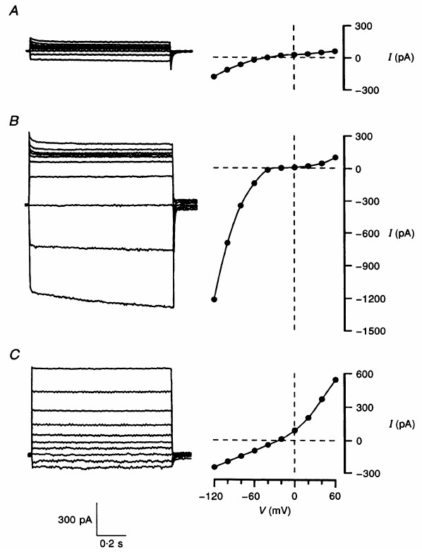 http://static-content.springer.com/image/art%3A10.1186%2F1743-8454-4-8/MediaObjects/12987_2007_Article_224_Fig6_HTML.jpg