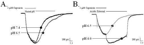http://static-content.springer.com/image/art%3A10.1186%2F1744-8069-1-28/MediaObjects/12990_2005_Article_28_Fig8_HTML.jpg
