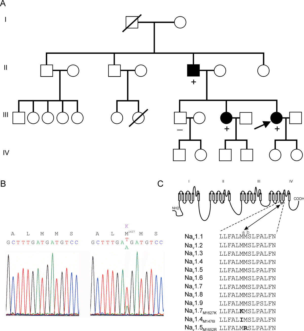 http://static-content.springer.com/image/art%3A10.1186%2F1744-8069-4-37/MediaObjects/12990_2008_Article_153_Fig1_HTML.jpg