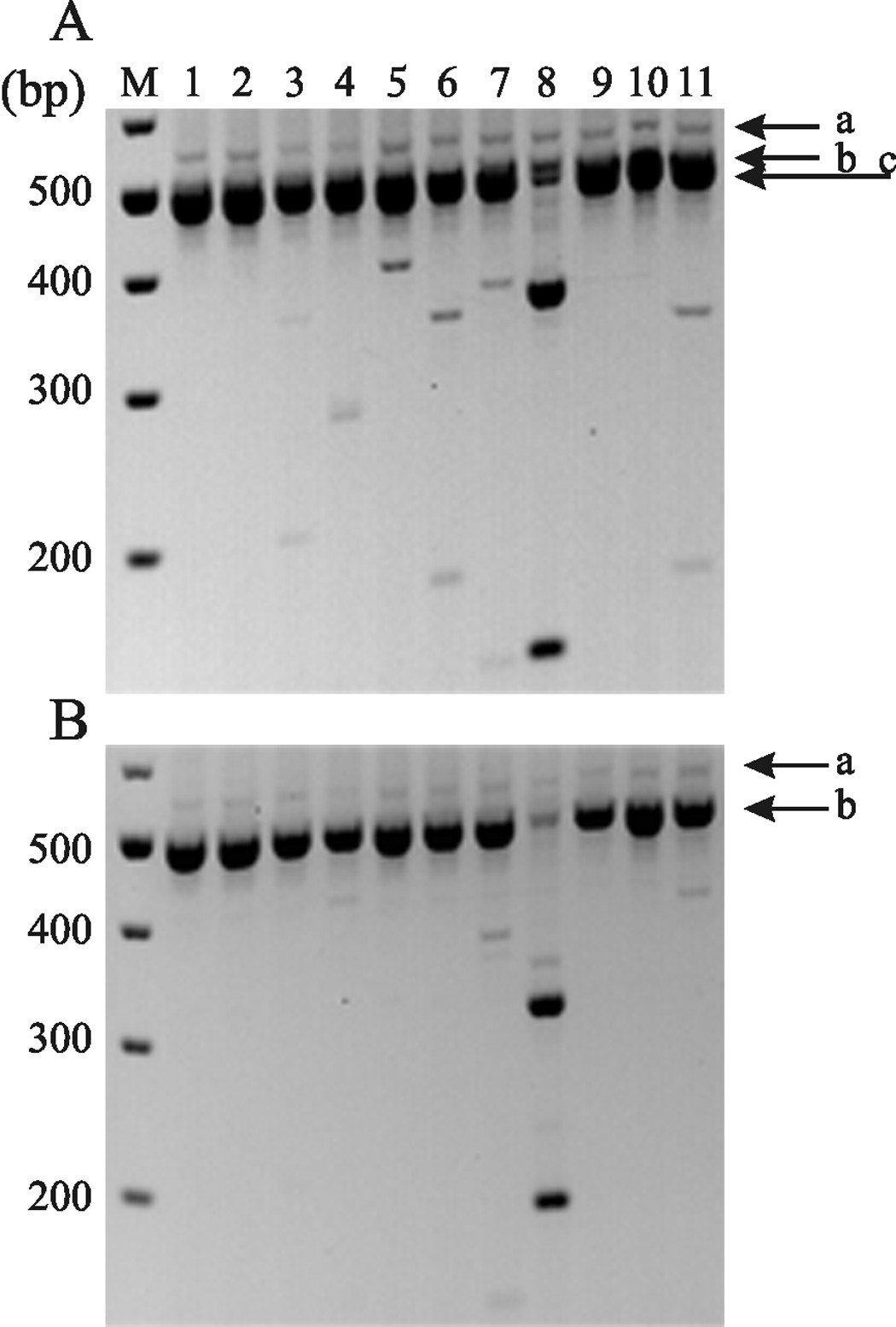 http://static-content.springer.com/image/art%3A10.1186%2F1744-8069-7-32/MediaObjects/12990_2011_Article_386_Fig1_HTML.jpg