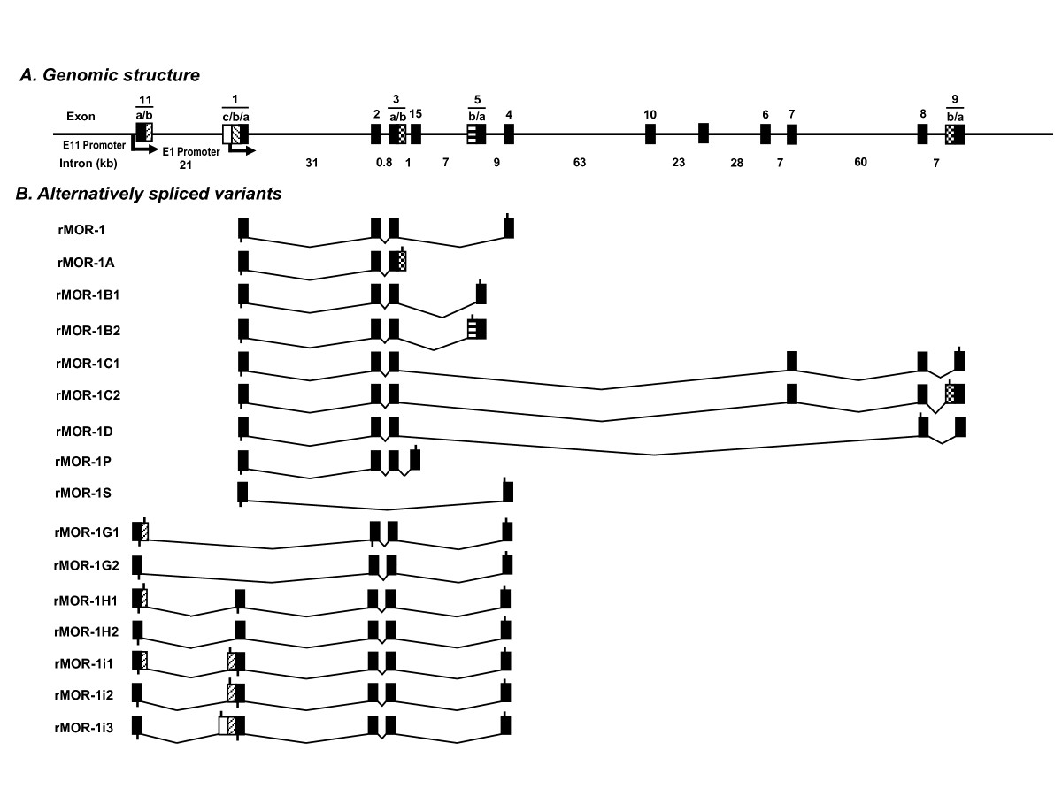 http://static-content.springer.com/image/art%3A10.1186%2F1744-8069-7-9/MediaObjects/12990_2010_Article_366_Fig1_HTML.jpg