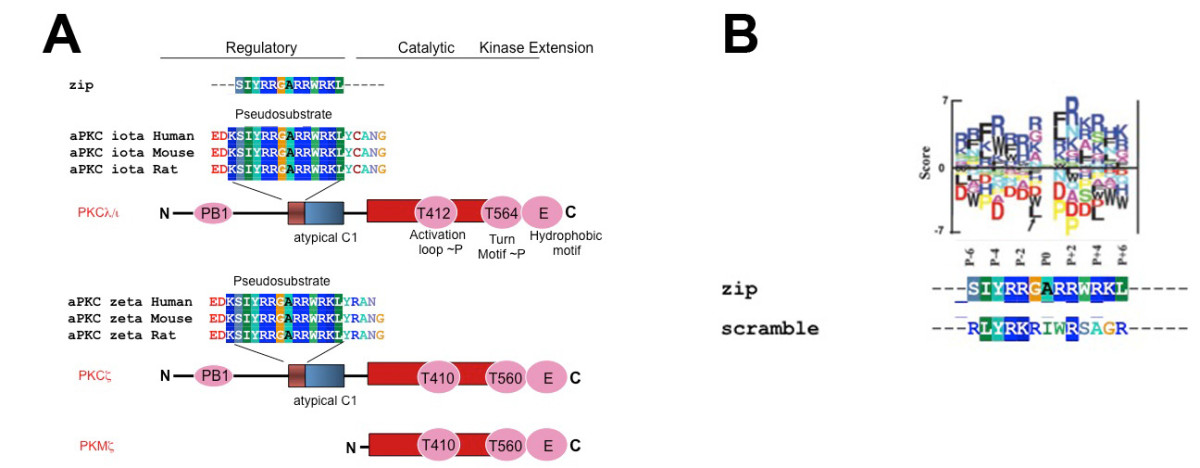 http://static-content.springer.com/image/art%3A10.1186%2F1744-8069-9-6/MediaObjects/12990_2013_Article_560_Fig1_HTML.jpg