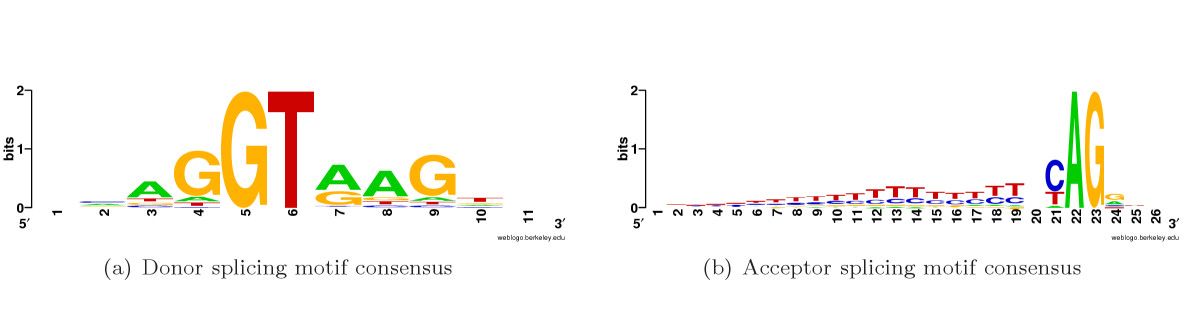 http://static-content.springer.com/image/art%3A10.1186%2F1745-6150-1-10/MediaObjects/13062_2006_Article_10_Fig1_HTML.jpg