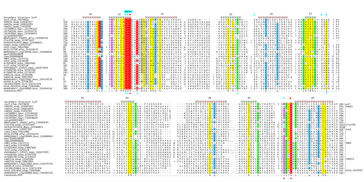 http://static-content.springer.com/image/art%3A10.1186%2F1745-6150-5-1/MediaObjects/13062_2009_Article_184_Fig1_HTML.jpg