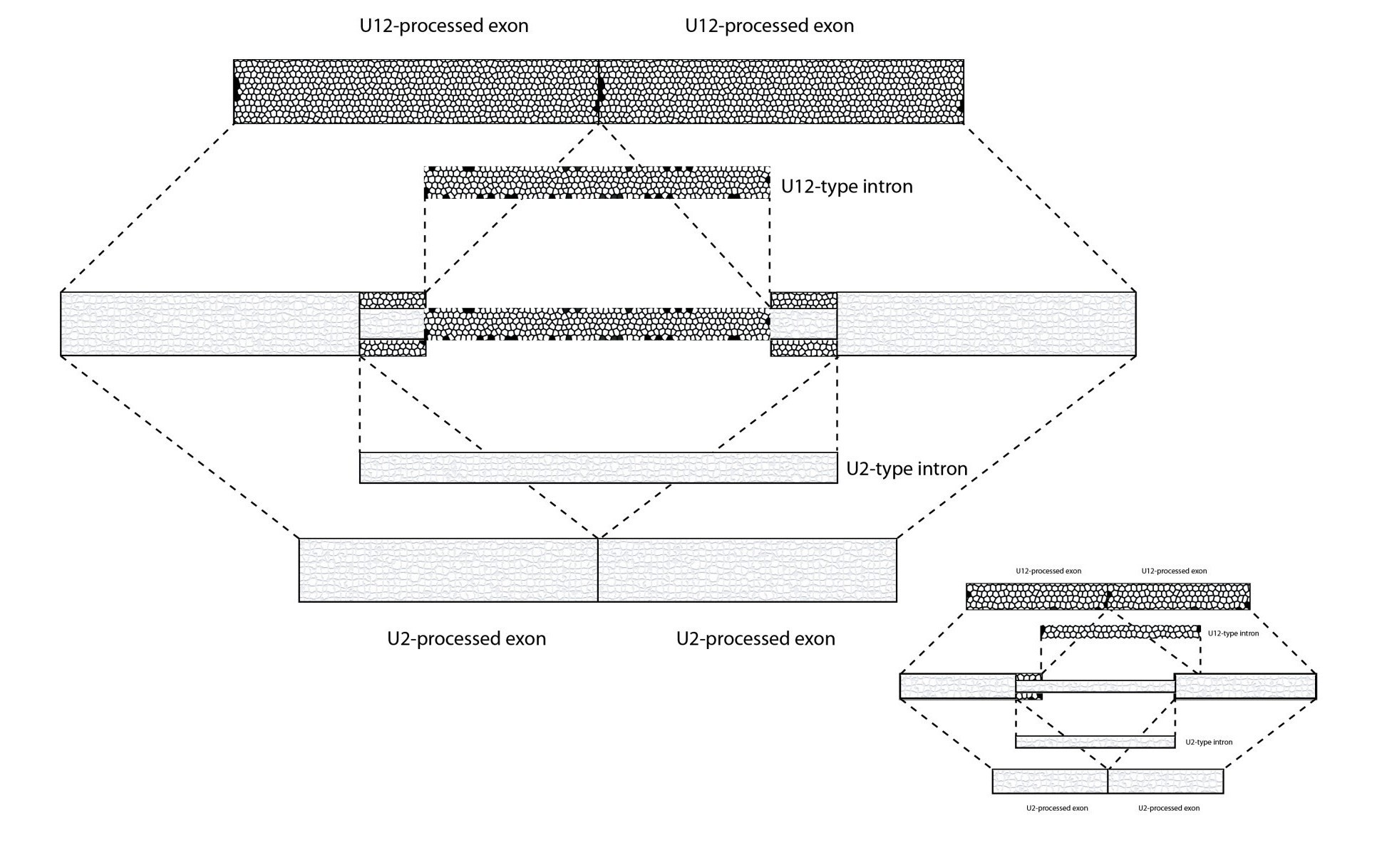 http://static-content.springer.com/image/art%3A10.1186%2F1745-6150-8-4/MediaObjects/13062_2012_365_Fig1_HTML.jpg