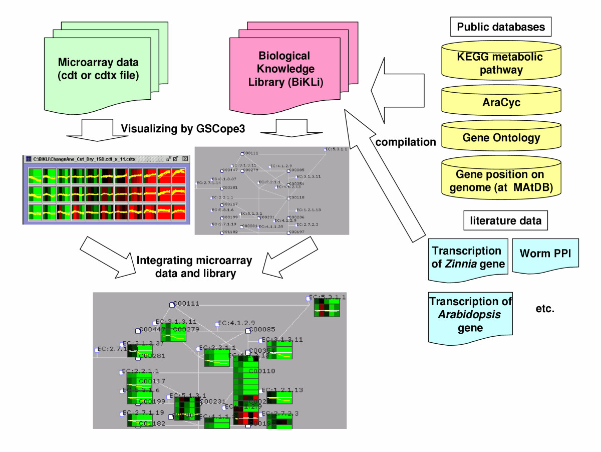 http://static-content.springer.com/image/art%3A10.1186%2F1746-4811-2-5/MediaObjects/13007_2005_Article_19_Fig2_HTML.jpg