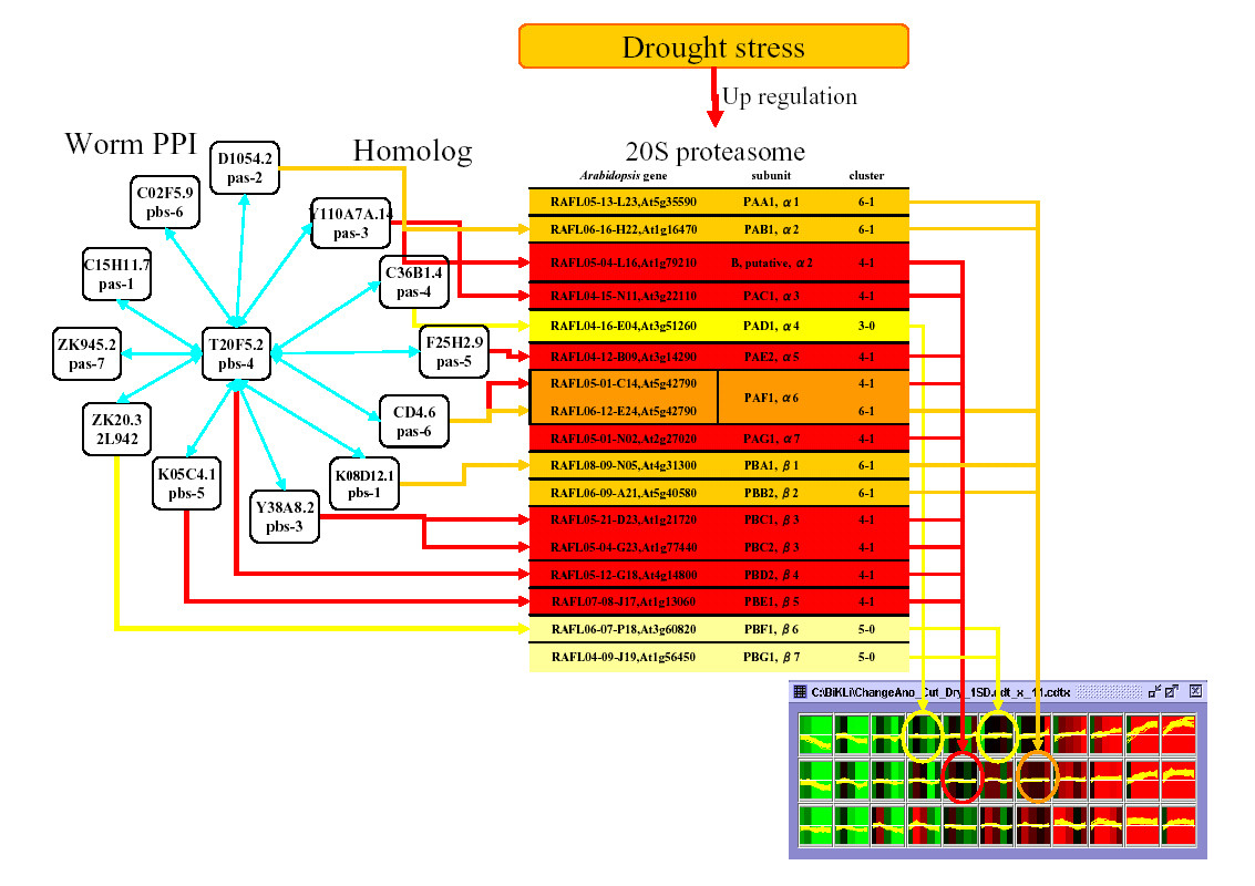 http://static-content.springer.com/image/art%3A10.1186%2F1746-4811-2-5/MediaObjects/13007_2005_Article_19_Fig8_HTML.jpg