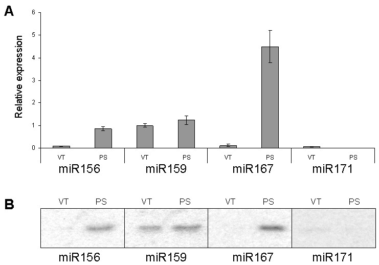 http://static-content.springer.com/image/art%3A10.1186%2F1746-4811-3-12/MediaObjects/13007_2007_Article_46_Fig7_HTML.jpg
