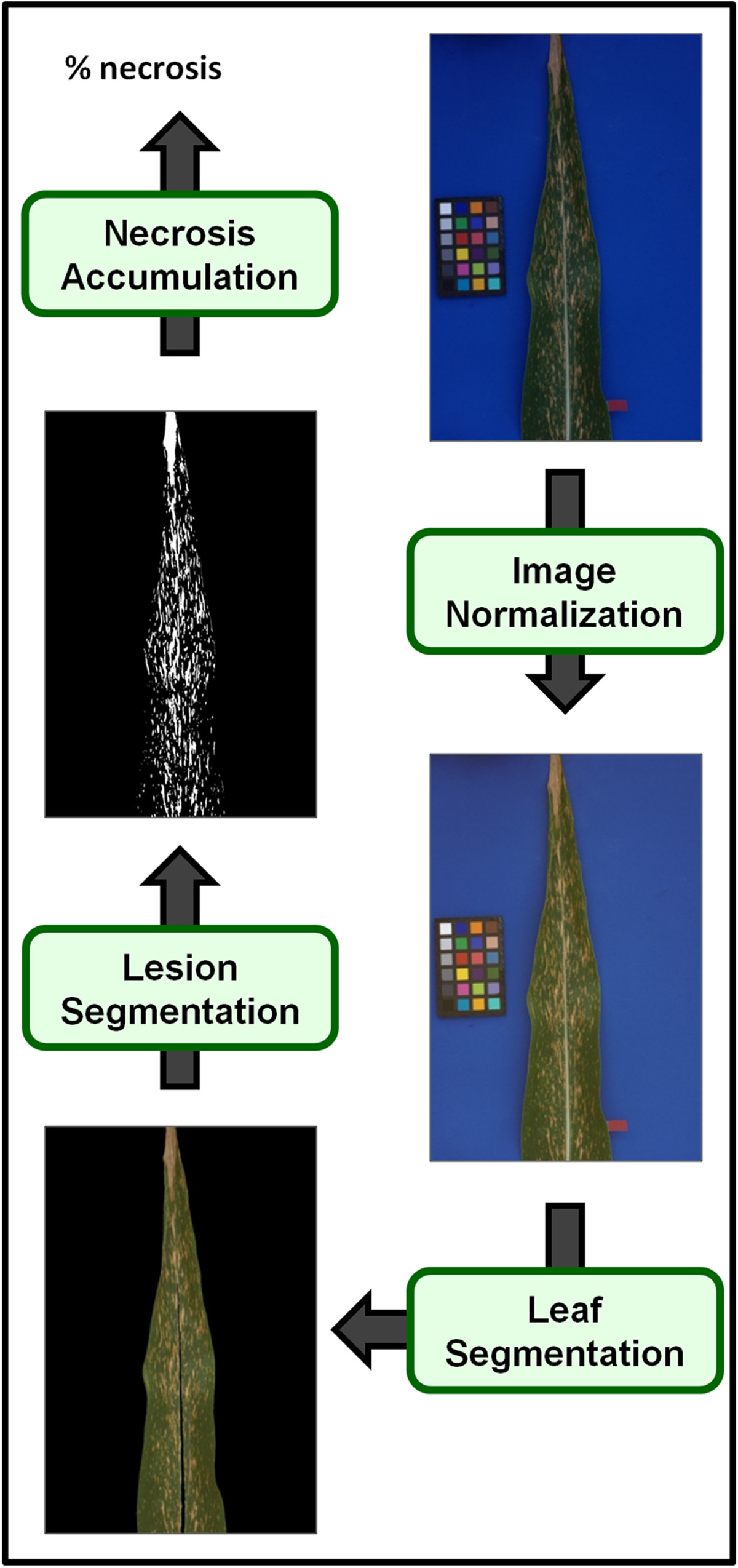 http://static-content.springer.com/image/art%3A10.1186%2F1746-4811-8-45/MediaObjects/13007_2012_Article_216_Fig6_HTML.jpg