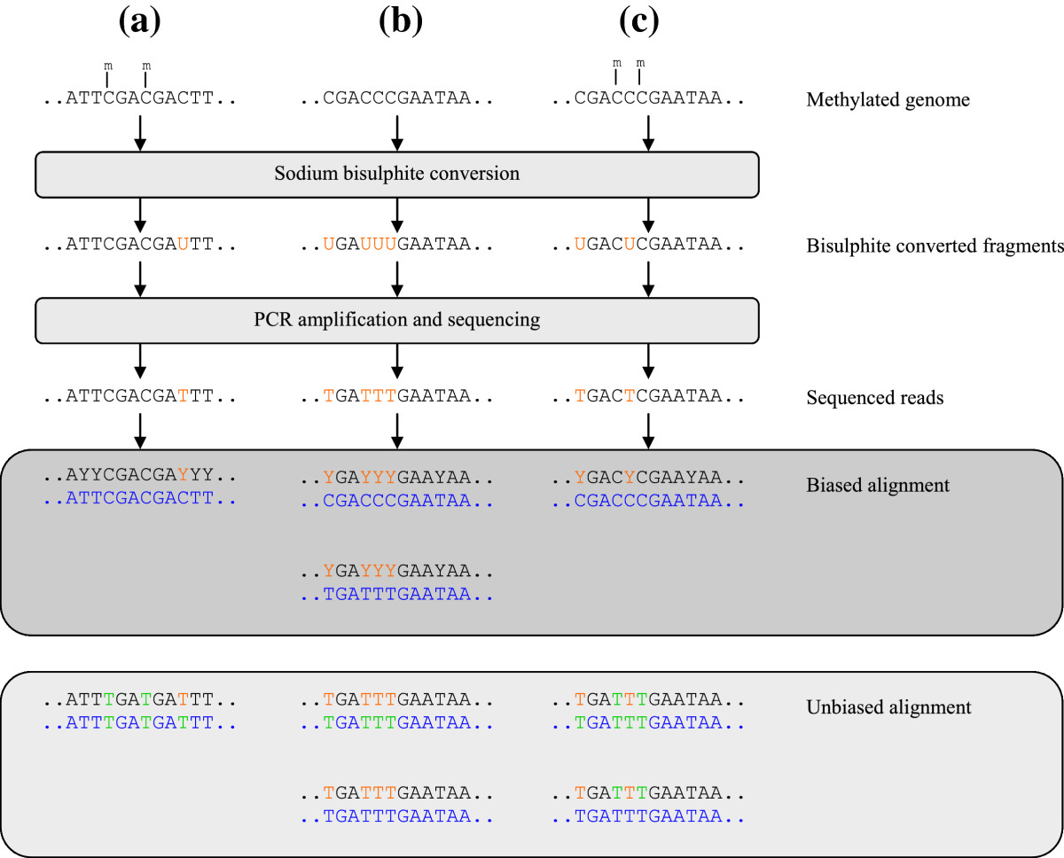 http://static-content.springer.com/image/art%3A10.1186%2F1746-4811-9-16/MediaObjects/13007_2013_Article_237_Fig1_HTML.jpg