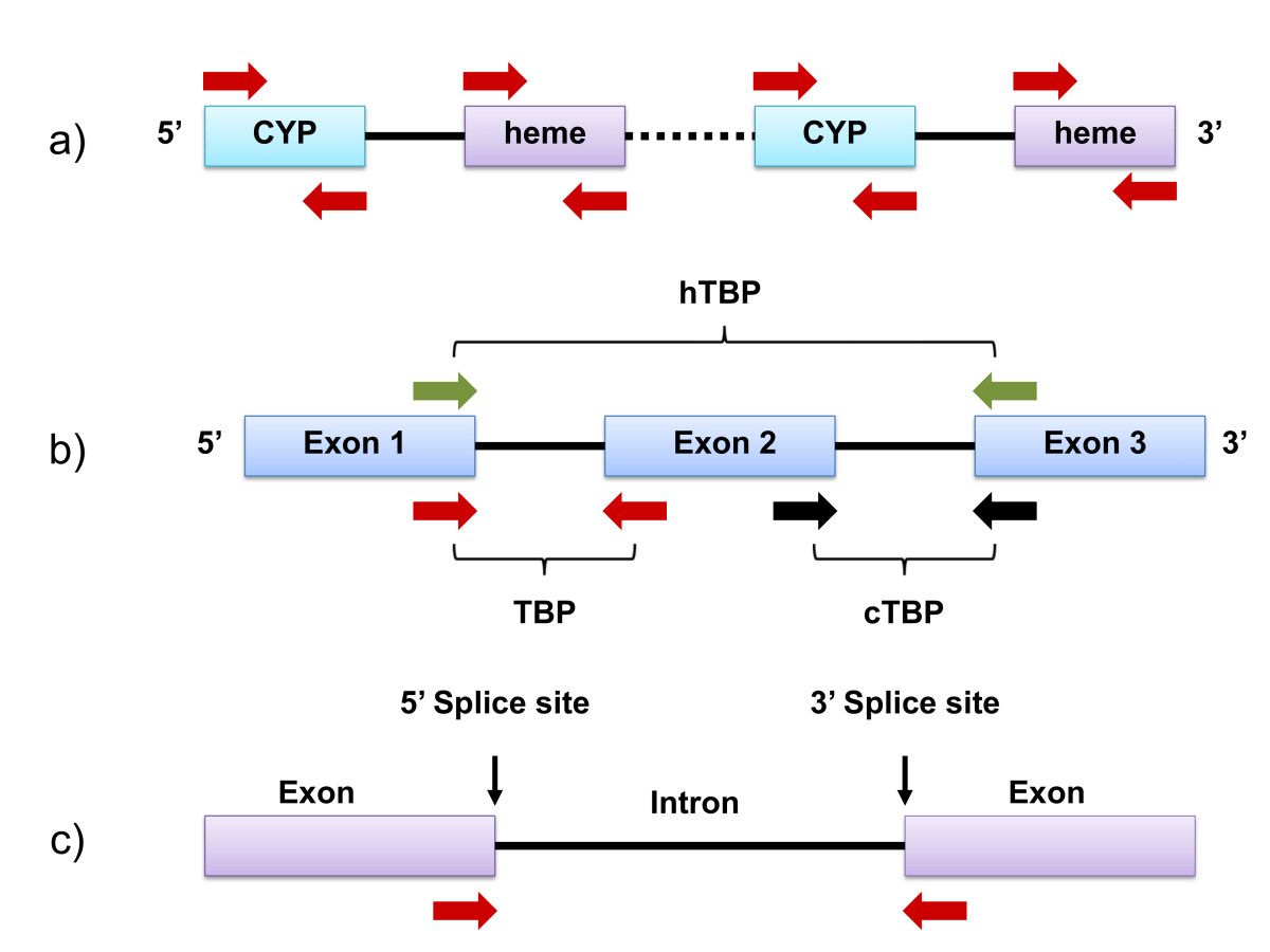http://static-content.springer.com/image/art%3A10.1186%2F1746-4811-9-6/MediaObjects/13007_2012_Article_225_Fig2_HTML.jpg