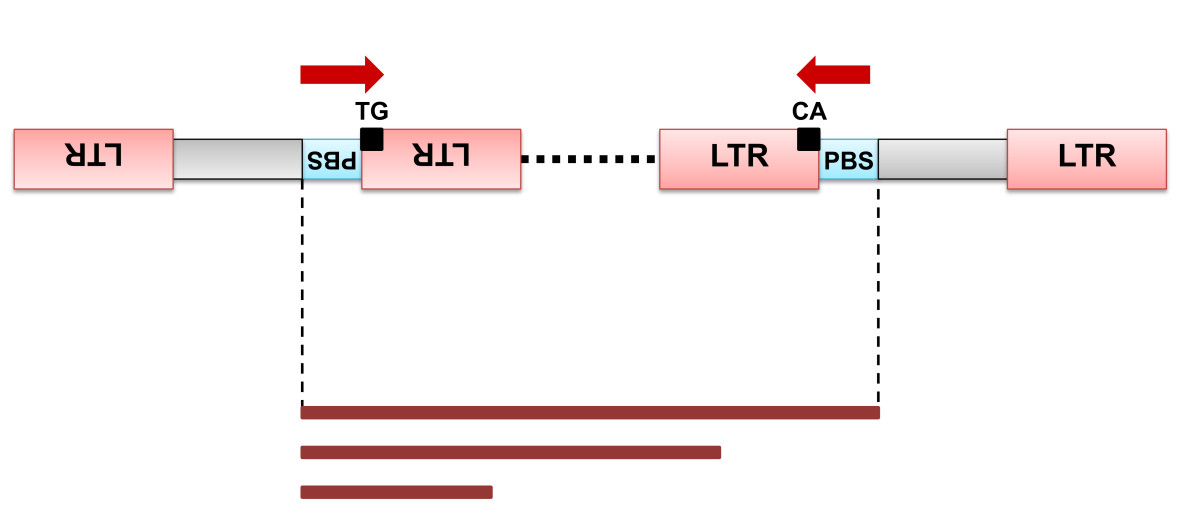 http://static-content.springer.com/image/art%3A10.1186%2F1746-4811-9-6/MediaObjects/13007_2012_Article_225_Fig6_HTML.jpg