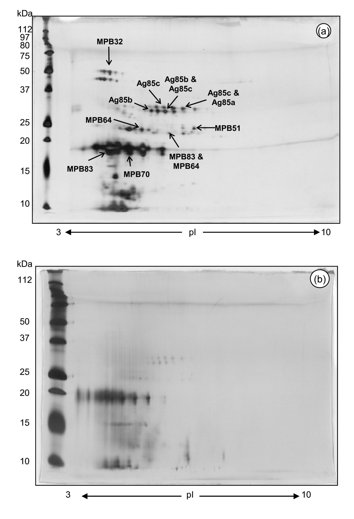 http://static-content.springer.com/image/art%3A10.1186%2F1746-6148-6-50/MediaObjects/12917_2010_Article_230_Fig3_HTML.jpg