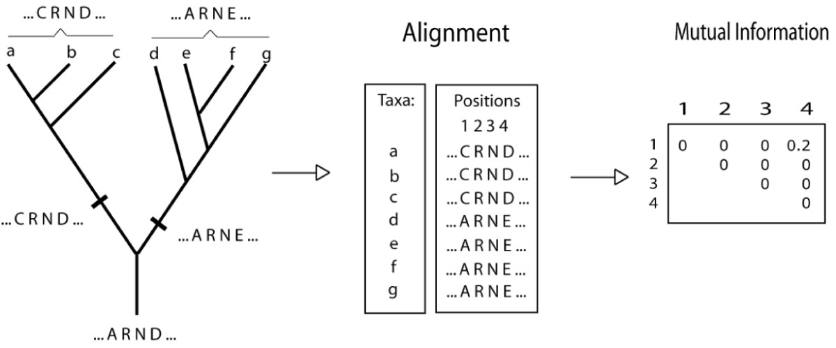 http://static-content.springer.com/image/art%3A10.1186%2F1748-7188-2-12/MediaObjects/13015_2007_Article_37_Fig1_HTML.jpg