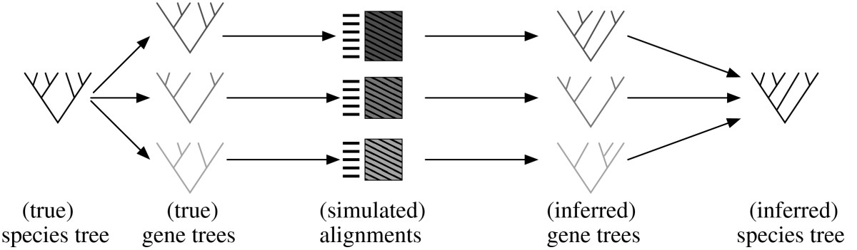 http://static-content.springer.com/image/art%3A10.1186%2F1748-7188-5-37/MediaObjects/13015_2010_Article_110_Fig1_HTML.jpg