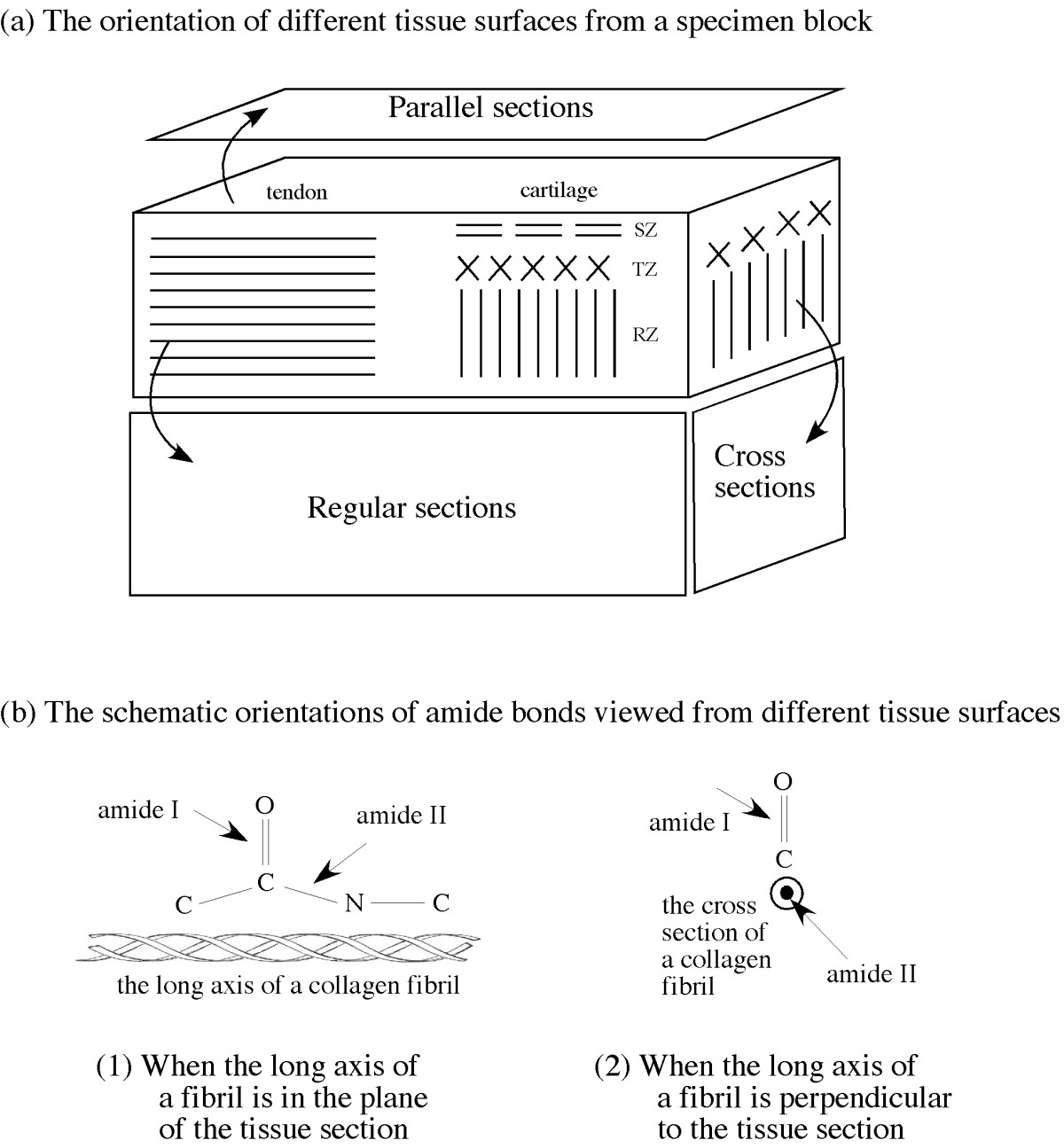 http://static-content.springer.com/image/art%3A10.1186%2F1749-799X-3-48/MediaObjects/13018_2008_Article_93_Fig1_HTML.jpg