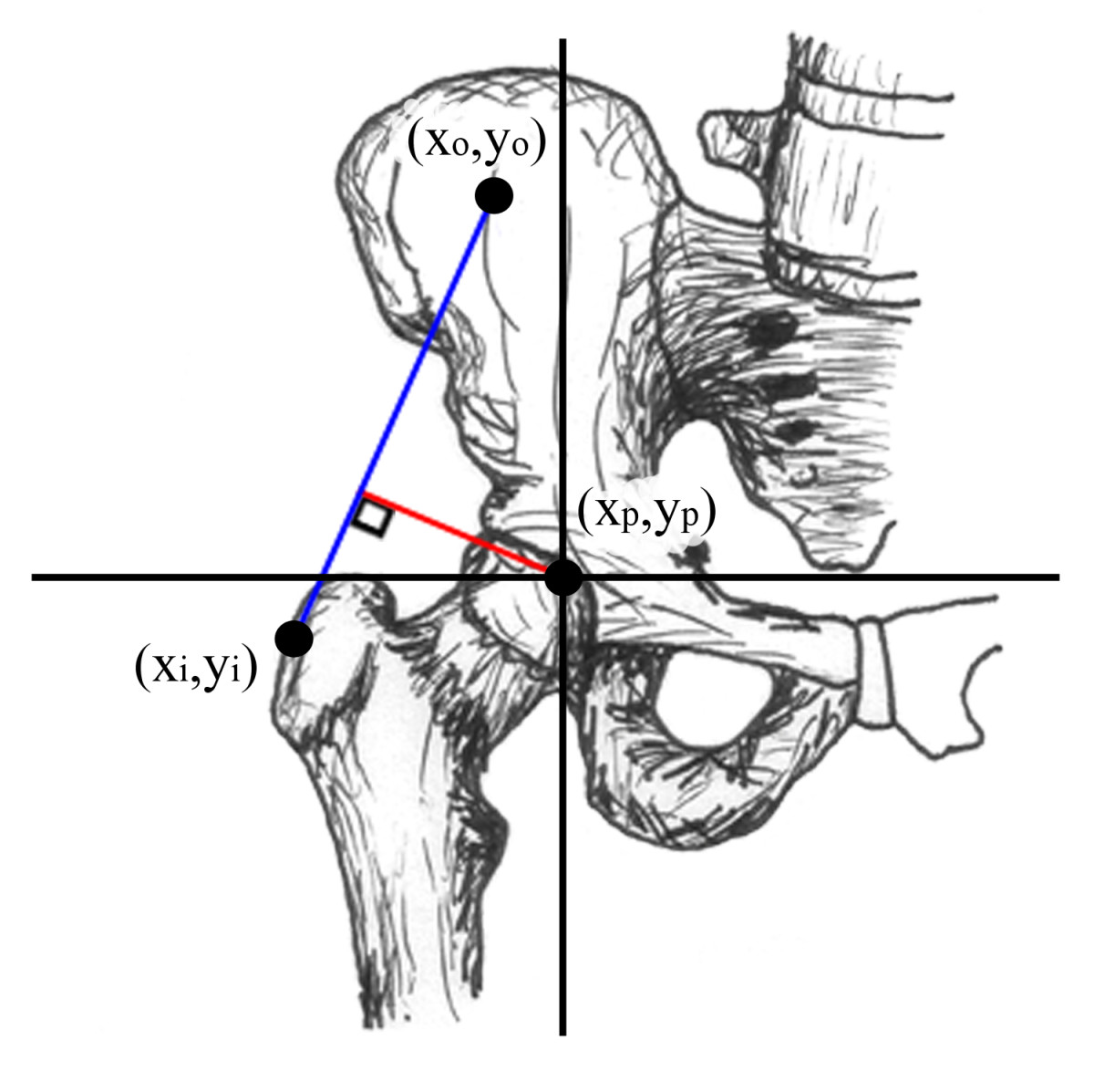 http://static-content.springer.com/image/art%3A10.1186%2F1749-799X-6-6/MediaObjects/13018_2010_Article_241_Fig1_HTML.jpg