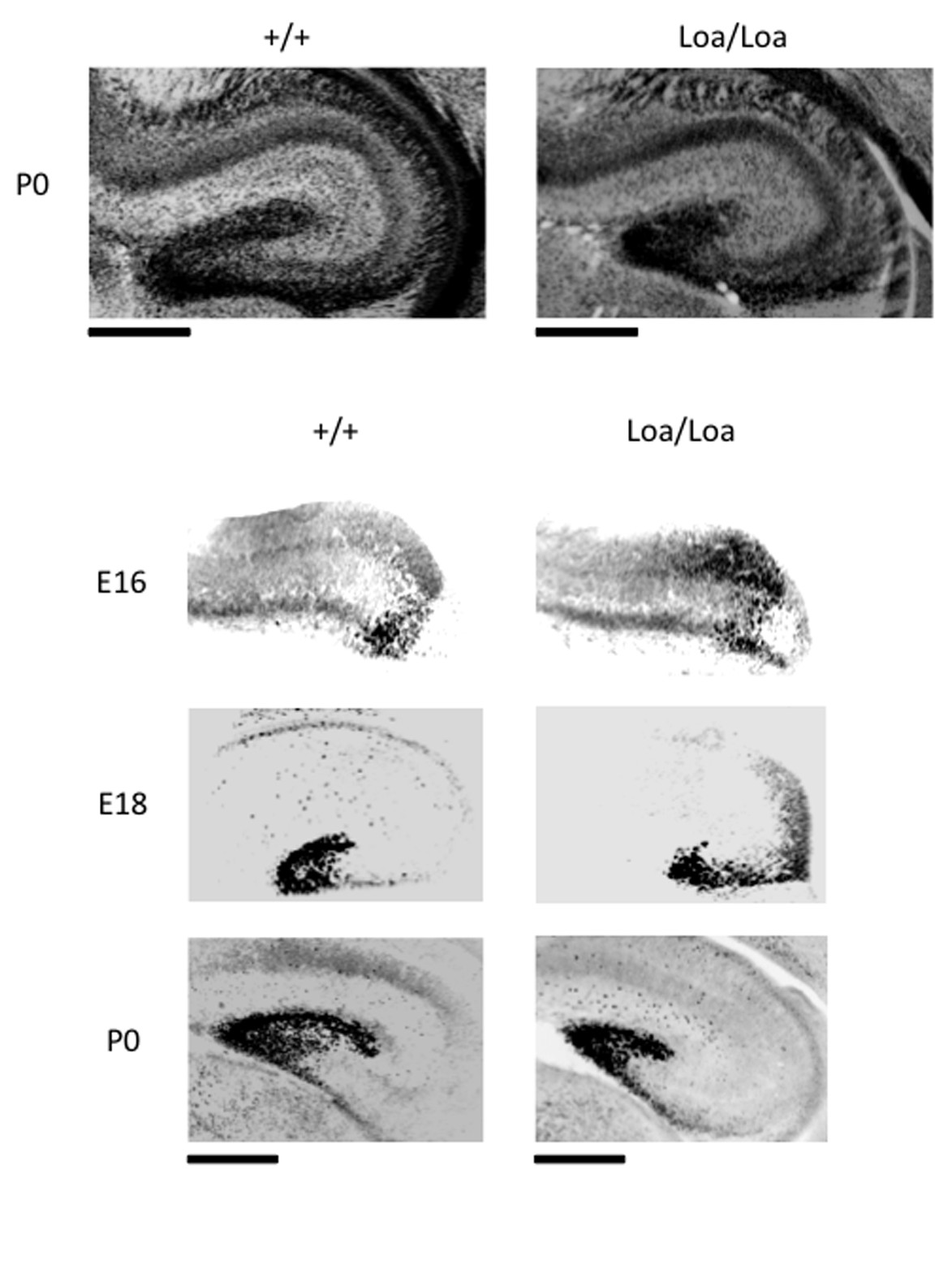 http://static-content.springer.com/image/art%3A10.1186%2F1749-8104-6-26/MediaObjects/13064_2011_Article_171_Fig2_HTML.jpg