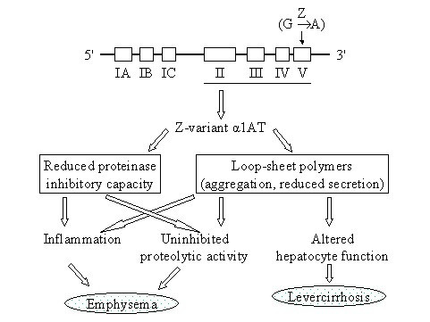 http://static-content.springer.com/image/art%3A10.1186%2F1750-1172-3-16/MediaObjects/13023_2007_Article_116_Fig2_HTML.jpg