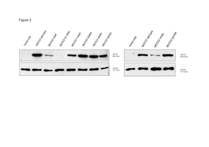 http://static-content.springer.com/image/art%3A10.1186%2F1750-1172-7-31/MediaObjects/13023_2012_408_Fig3_HTML.jpg