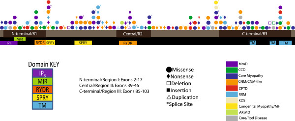 http://static-content.springer.com/image/art%3A10.1186%2F1750-1172-8-117/MediaObjects/13023_2013_668_Fig3_HTML.jpg