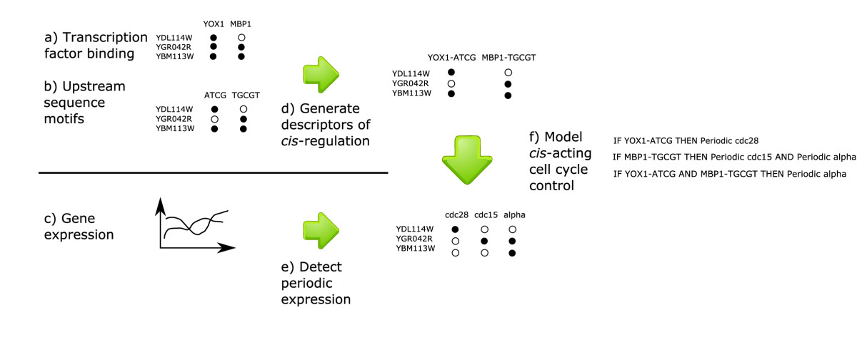 http://static-content.springer.com/image/art%3A10.1186%2F1752-0509-1-45/MediaObjects/12918_2007_Article_45_Fig1_HTML.jpg